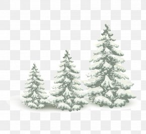 Falling Snow Pine Tree PNG