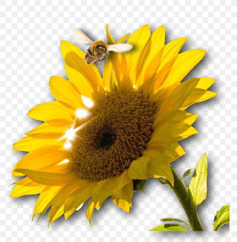Renewable Energy Photovoltaic System Alternative Energy Energiequelle, PNG, 768x837px, Renewable Energy, Alternative Energy, Bee, Bee Pollen, Bumblebee Download Free