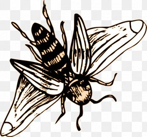Insect - Insect Wing Western Honey Bee Drawing PNG
