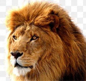 Lions Head - Macintosh Mac OS X Lion MacOS Operating System PNG