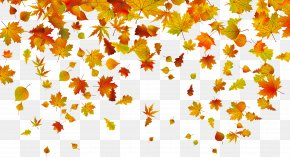 Withered Autumn Leaves - Autumn Leaf Color Clip Art PNG
