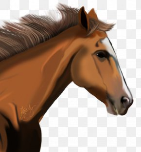 Horse Image - American Miniature Horse Clip Art PNG