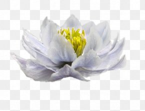 White Snow Lotus - White Blue Color Woman PNG