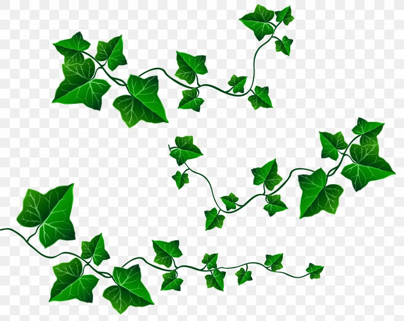 Vine Leaf Ivy Clip Art Png 6240x4964px Vine Branch Color Flower Grape Download Free