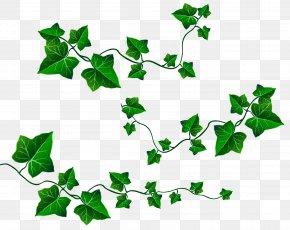 Vine Leaves Decoration Clipart Picture - Vine Leaf Ivy Clip Art PNG