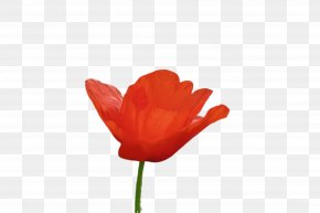 Leaf Coquelicot - Orange PNG