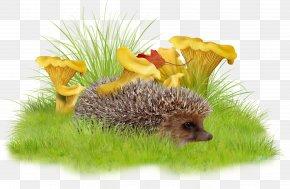Grass Hedgehog - Raster Graphics Clip Art PNG