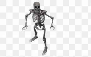 Skeleton - Human Skeleton Bone PNG