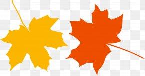 Autumn Leaves - Japanese Maple Autumn Leaf Color Clip Art PNG