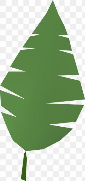 Palm - Arecaceae Palm Branch Leaf Clip Art PNG