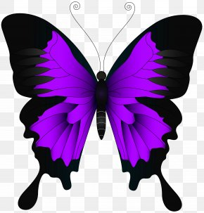 Purple Butterfly Clip Art Image - Butterfly High-definition Video Wallpaper PNG