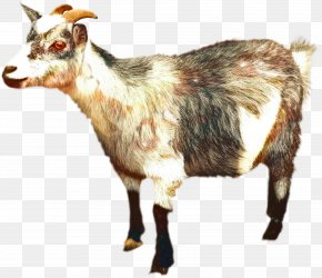 Clip Art Image Vector Graphics Russian White Goat PNG