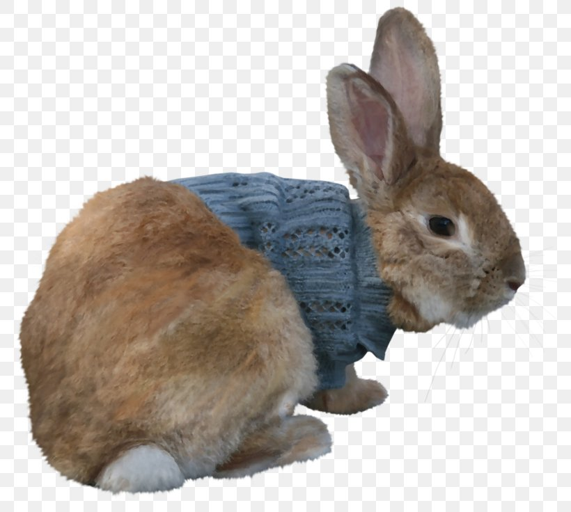 Domestic Rabbit Hare Easter Bunny Polish Rabbit, PNG, 800x736px, Domestic Rabbit, Animal, Easter Bunny, European Rabbit, Fauna Download Free