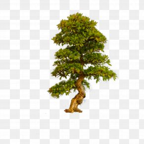 Tree - Bonsai Trees (ebook Clip Art Image PNG