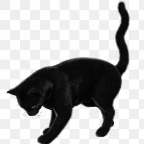 Black Cat - Black Cat Bombay Cat Korat Burmese Cat European Shorthair PNG
