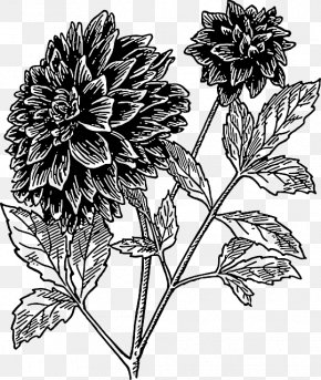 Flower Drawing - Dahlia Flower Drawing Clip Art PNG