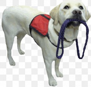Animal Service Cliparts - Labrador Retriever Puppy Assistance Dog Service Dog Therapy Dog PNG