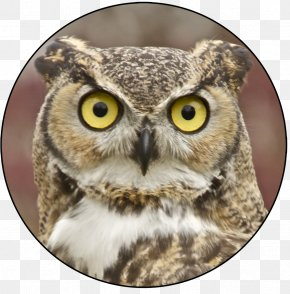 Owls - John James Audubon Center At Mill Grove Owl Bird PNG