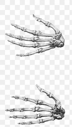 Hand - Finger Anatomy Accessory Bone Hand PNG