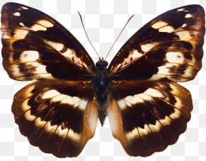 Butterfly Insect - Butterfly Insect Megabyte Clip Art PNG