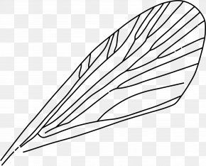 Insect - Insect Wing Drawing Airplane Clip Art PNG