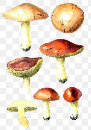Hand-painted Mushroom Mushrooms - Mushroom Bird Fungus Shiitake PNG