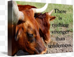 Tenderness - Cattle Ox Gallery Wrap Canvas Art PNG