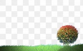 Lawn Tree - Tree Lawn Clip Art PNG