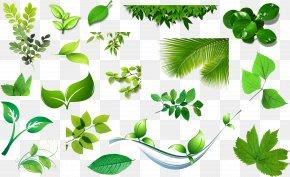 Spring Planting Cartoon Banana Leaf - Clip Art Image Leaf Vector Graphics PNG