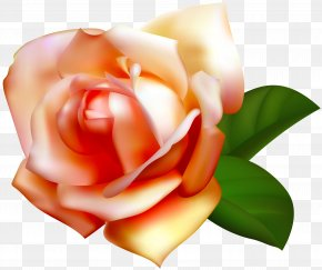 Beautiful Rose Clipart Image - Image File Formats Lossless Compression PNG