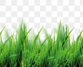 Free To Pull Grass Material - Software PNG