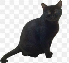 Black Cat - Bombay Cat Burmese Cat Black Cat Korat Havana Brown PNG