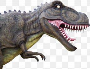 Dinosaur - Dinosaur Tyrannosaurus PNG