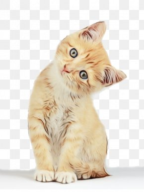British Semilonghair Norwegian Forest Cat - Hello Kitty Cartoon PNG