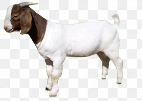 Goat - Goat Clip Art Image Transparency PNG