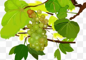 Grape - Grape Seedless Fruit Food PNG