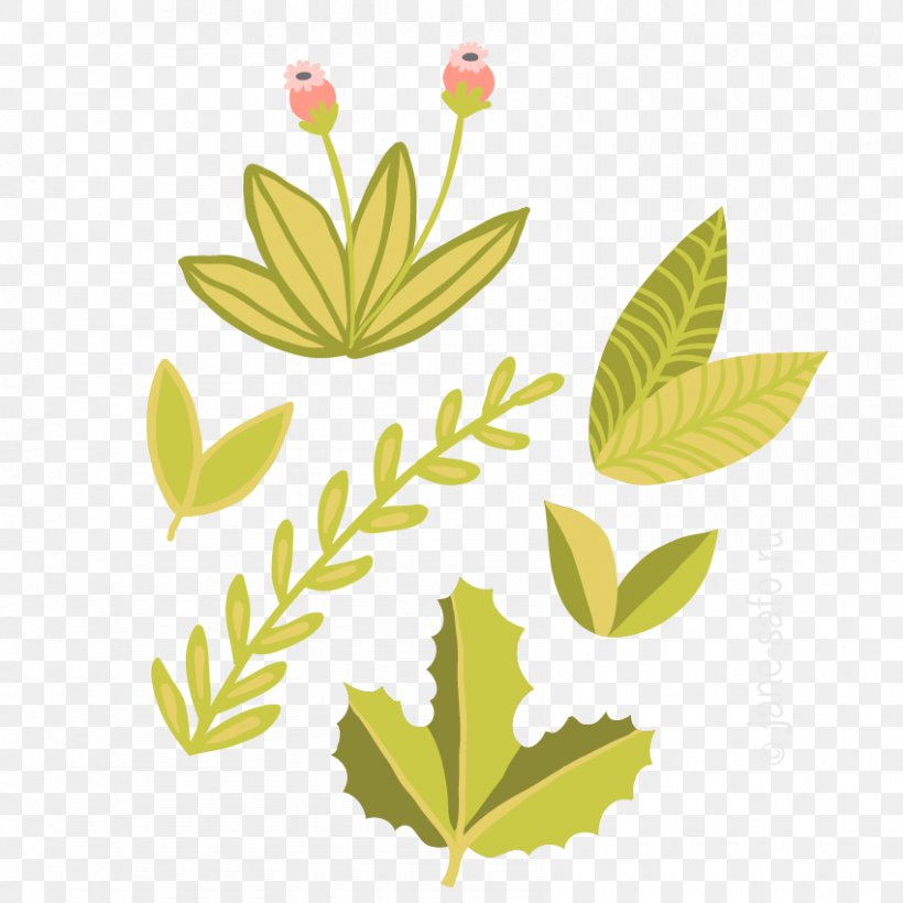 Leaf Look At Leaves Green Clip Art, PNG, 850x850px, Leaf, Autumn Leaves, Branch, Deciduous, Flora Download Free