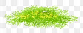 Grass - Green Tree Computer Wallpaper PNG