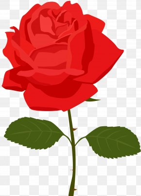 Transparent Red Rose Picture - Rose Flower Clip Art PNG