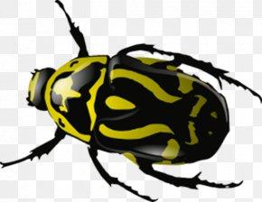Yellow Markings Beetle - 2017 Volkswagen Beetle Ladybird Clip Art PNG