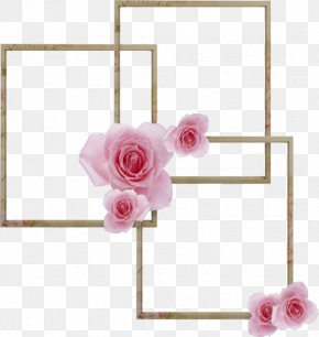 Rose Plant - Flowers Background PNG