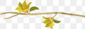 Decorative Edge Flower - Flower Icon PNG