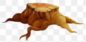 Turtle Tortoise - Watercolor Tree PNG