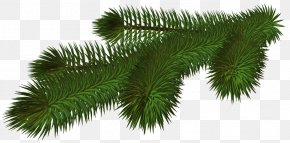 Transparent Pine Branch 3D Picture - Christmas Tree Branch Clip Art PNG