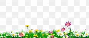 Flowers In Full Bloom Natural Environment - Download Nature PNG