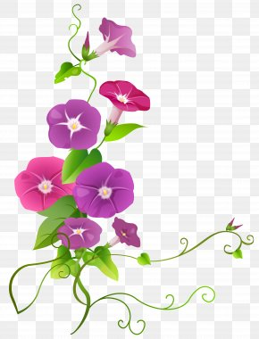Ipomoea Flower Transparent Clip Art Image - Clip Art PNG