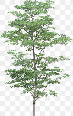 Tree Image - Architecture 3D Computer Graphics Clip Art PNG