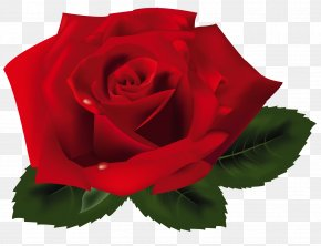 Red Rose Clipart - Rose Clip Art PNG