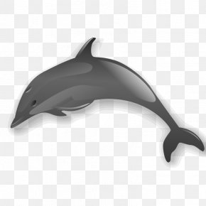 Dolphin Clip - Dolphin Clip Art PNG