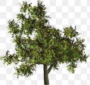 Tree - Tree Shrub Woody Plant French Lavender PNG